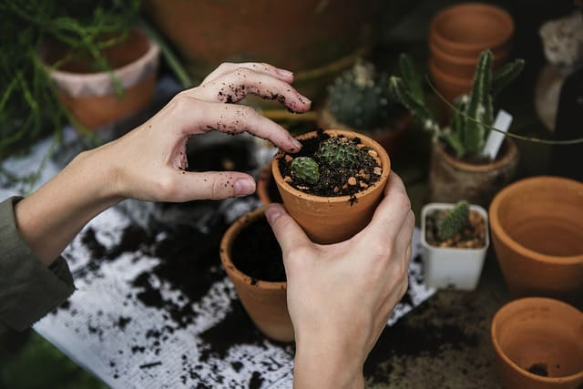 4 Gardening Basics You Need To Know