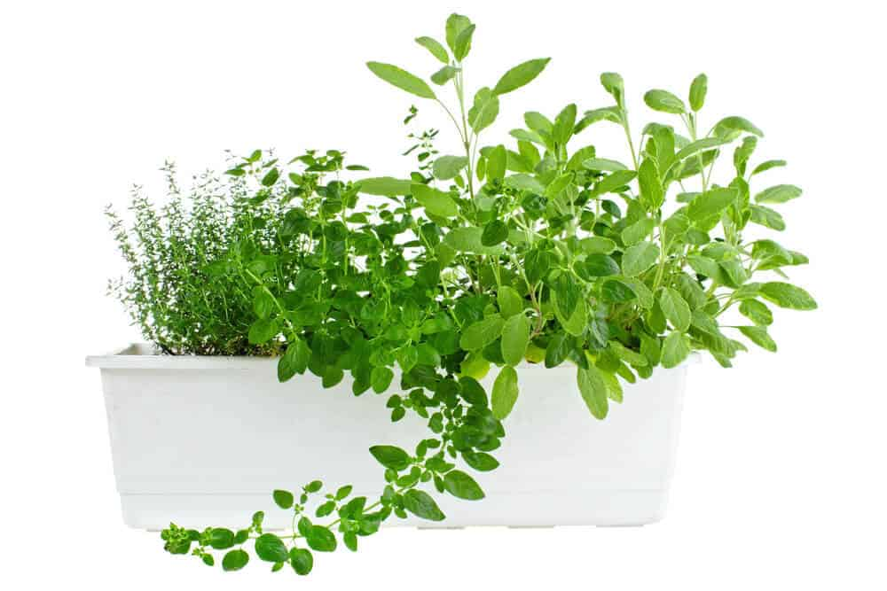 herb planters are good presents for gardeners