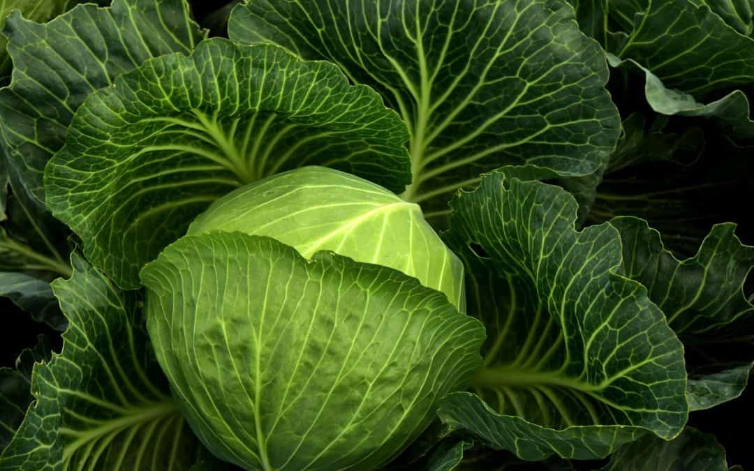 Top 8 Vegetables You Should Consider Growing This Winter