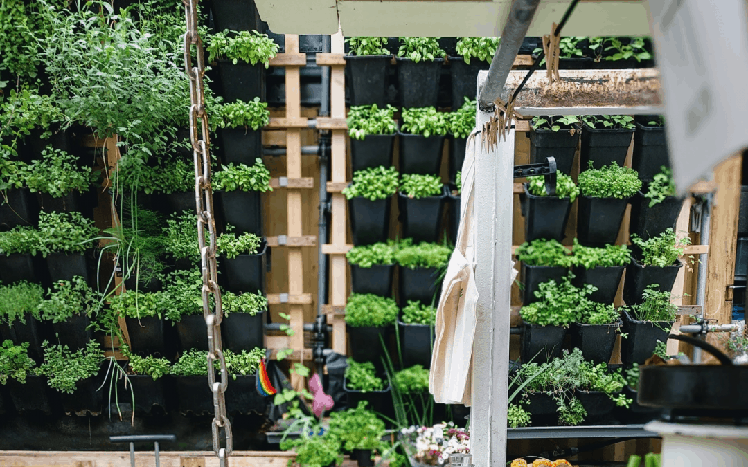 Urban Farming 101: The Best Methods, Tools & Tips For Beginners